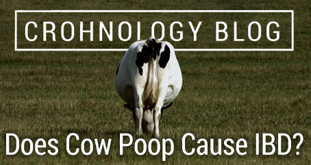 Does Cow Poop Cause IBD?
